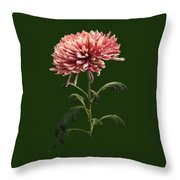 Chrysanthemum Shelbers Throw Pillow