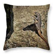 Chuckwalla - Crevice Throw Pillow
