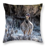 Chukar Throw Pillow