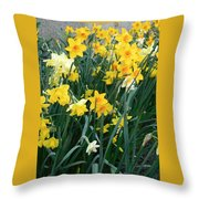 Circle Of Daffodils Throw Pillow
