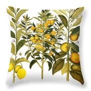 Citron And Orange, 1613 Throw Pillow