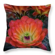 Claret Cup Cactus Flowers  Throw Pillow