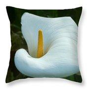Classic Cala Throw Pillow