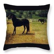Classic Morgan Horses Throw Pillow