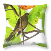 Clay-colored Robin Throw Pillow