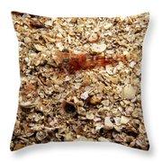 Cleaner Shrimp On Shell Covered Bottom Throw Pillow