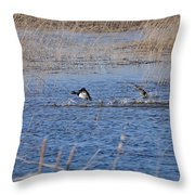 Cleared For Takeoff-ring-necked Ducks  Throw Pillow
