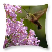 Clearwing Pink Throw Pillow