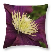 Clematis 4000 Throw Pillow
