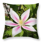 Clematis Andromeda Throw Pillow