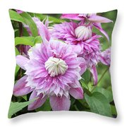 Clematis Josephine #6 Throw Pillow