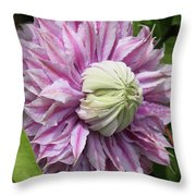 Clematis Josephine #7 Throw Pillow