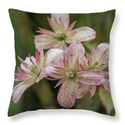 Clematis Montana Marjorie 1963 Throw Pillow