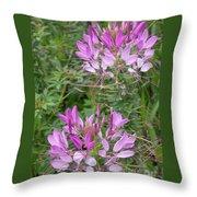 Cleome Sparkler Lavender Throw Pillow