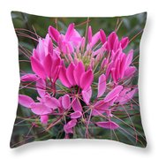 Cleome Spinosa  Throw Pillow