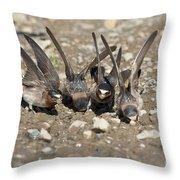 Cliff Swallows Gather Mud Throw Pillow