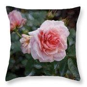 Climber Romantica Tea Rose, Digital Art Throw Pillow