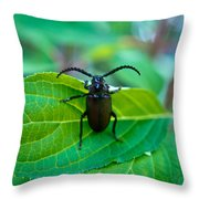 Climbing Beetle Throw Pillow