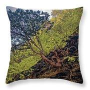 Climbing Tree Roots Throw Pillow