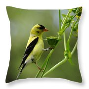 Clinging Goldfinch Throw Pillow