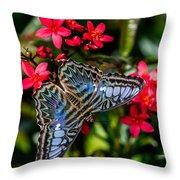 Clipper Butterfly 1 Throw Pillow