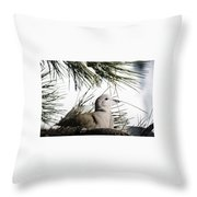 Close Up African Collared Dove Throw Pillow