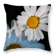 Close Up Daisy Throw Pillow