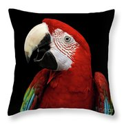 Close-up Funny Portrait Green-winged Macaw, Ara Chloroptera, Isolated Black Background Throw Pillow by Sergey Taran