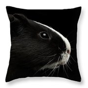 Close-up Guinea Pig On Isolated Black Background Throw Pillow by Sergey Taran