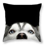 Close-up Head Of Peeking Siberian Husky Throw Pillow by Sergey Taran