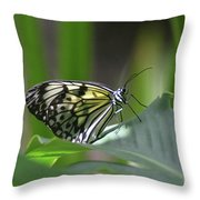 Close Up Look At A Paper Kite Butterfly On Foliage Throw Pillow