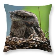 Close Up Look At A Tawny Frogmouth Sitting In A Nest Throw Pillow