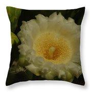 Close Up Of A Cactus Bloom. Throw Pillow