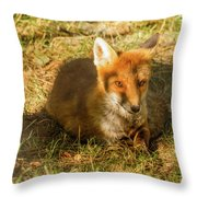 Close-up Of A Fox Resting In A Park Throw Pillow