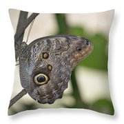 Close Up Of A Pretty Brown Morpho Butterfly  Throw Pillow