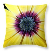 Close-up Of A Yellow African Daisy Throw Pillow