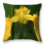 Close Up Of A Yellow Bearded Iris Throw Pillow