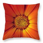 Close Up Of An Orange Daisy Throw Pillow