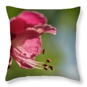 Red Horsechestnut Flower Throw Pillow