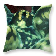 Close-up Of Giant Clam, Tridacna Gigas Throw Pillow