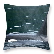 Close-up Of Killer Whale In Johnstone Throw Pillow
