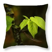 Close Up Of Leaves In Forest Throw Pillow