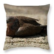 Close-up Of Mottled Pigeon On Sandy Ground Throw Pillow