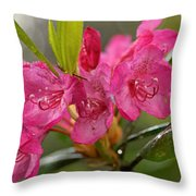 Close-up Of Pink Horatio Flowers Throw Pillow