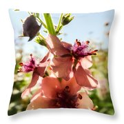 Close-up Of Pink Mullein Flowers Throw Pillow