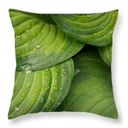 Close-up Of Raindrop On Green Leaves Throw Pillow