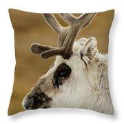 Close-up Of Reindeer Head On Snowy Ridge Throw Pillow