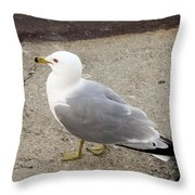 Close-up Of Seagull Throw Pillow