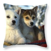 Close Up Of Siberian Husky Puppies Throw Pillow by Nick Norman