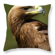 Close-up Of Sunlit Golden Eagle Looking Back Throw Pillow